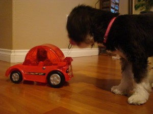 Even Shyla and Hammy got into the act. Pity when your pets have a better ride than you.