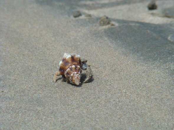Mr. hermit wanted us off his beach.