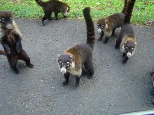 Same critters