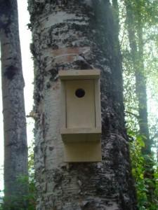 Ben's birhouse
