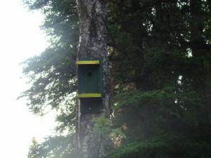 Jeremy's birdhouse